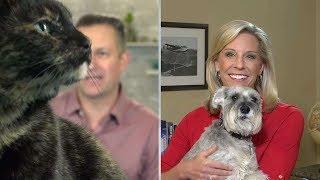 Pets Crash Live Weather Report