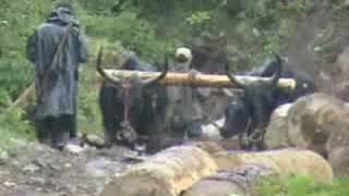 Tibetan subsistance logging in Yunnan, China (Kham, Tibet). Tibetan...