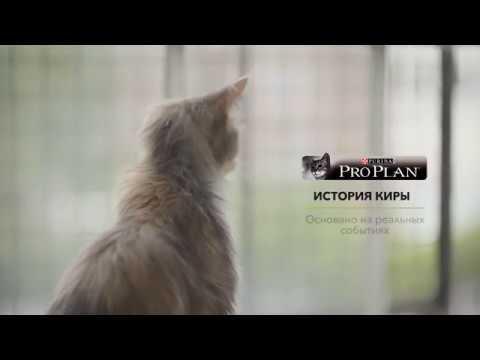Международная выставка кошек Гран-При Purina Pro Plan 2017 - YouTube