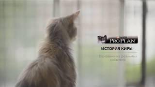 Корм PRO PLAN® Sterilised® для стерилизованных кошек и кастрированных котов