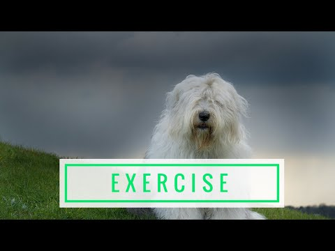 Exercising Your Dog The Right Way