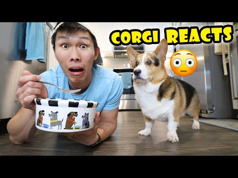 Corgi's Reaction When I Eat Out of His Bowl || Life After College: Ep. 675