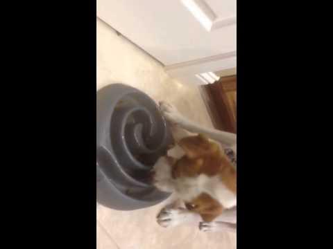 Dog Maze Bowl