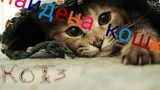 Найдена  кошка кемерово