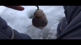 Рыбалка видео Безнасадка, безмотылка и отличный , надёжный кивок. И дурим рыбу!!(Рыбалка видео . Ловись рыбка большая и маленькая . Не снимая перчаток и ничего не насаживая . Раз и готово..., 2016-02-05T07:22:51.000Z)