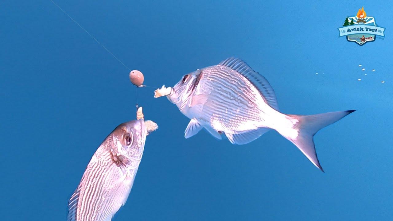Çupra Çıldırdı!! / Göç Balıkları Küçükbahçe'de! - 15 Ocak 2020