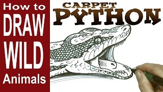 How to Draw a Snake - the Carpet Python (beginner)- Spoken Tutorial