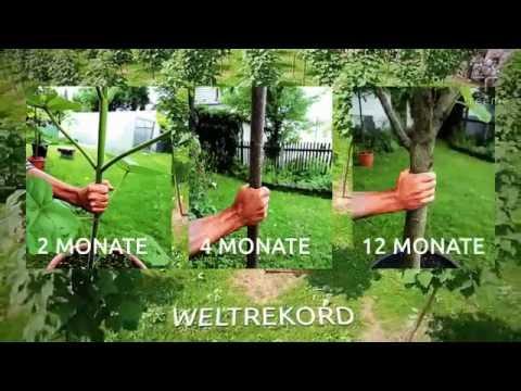 Edelholz sicher investieren✓ Sachwert✓ Treeme Baumfairmögen