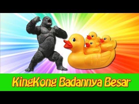 Lagu Anak Sekolah Minggu KingKong Badannya Besar