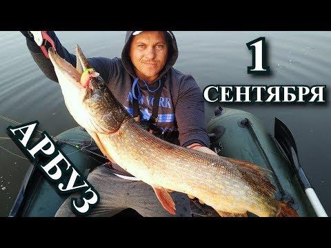 Осенняя рыбалка и сумасшедшие поклевки! 1 сентября порадовало!)