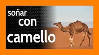 Soñar con camello 🐪 Demasiada energía, ¿quizás?, o no...
