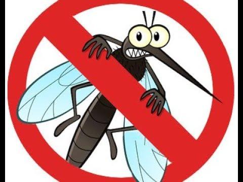 Repelente caseiro muito f cil e barato contra mosquitos - Como ahuyentar los mosquitos ...
