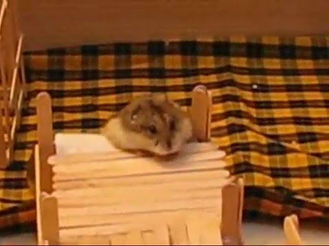 Homemade hamster playpen toys youtube for How to build a hamster cage