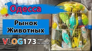 Где в Одессе найти питомца? Рынок домашних животных рядом со Староконным