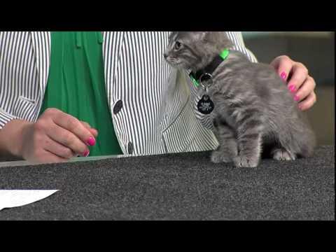 Rescue Rundown: Kitten Season
