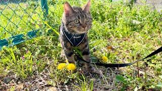 川沿いの公園を散歩したら楽しすぎてテンションが上がってしまった子猫w