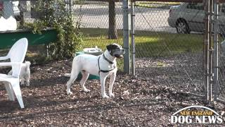 Ri Dog Park: Newport Dog Park- Newport, Rhode Island