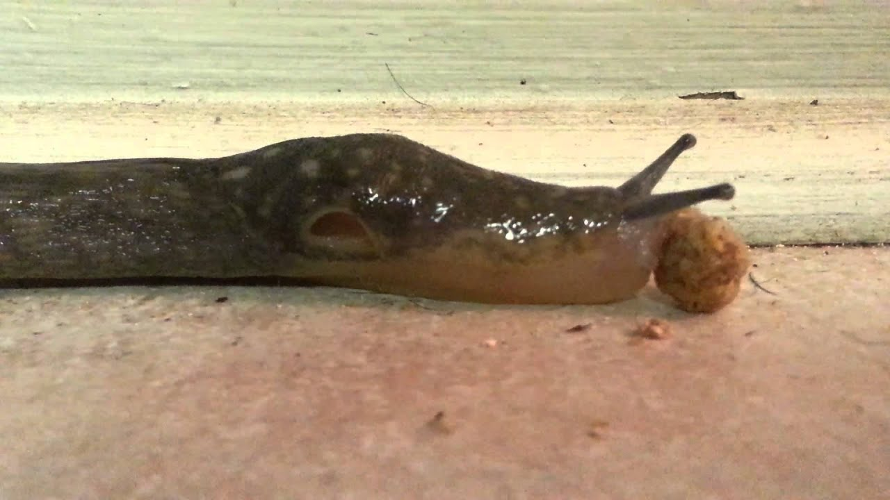 What If My Dog Eats A Slug