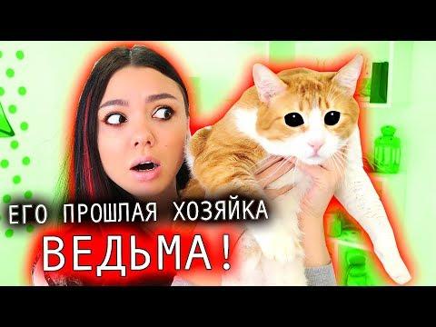 ВЕДЬМА ЗАКОЛДОВАЛА МОЕГО КОТА! Три Кота и их ИСТОРИЯ