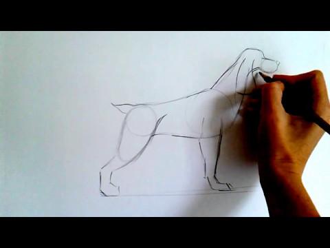 Как нарисовать русского спаниеля