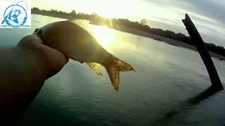 Lihat !! Tarikan kuat Ikan Seurukan Aceh pakai umpan buah sawit #28