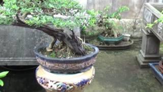 Vườn anh Trung Phủ -Tại Phủ Dầy Nam Định