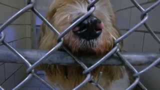 What do taxpayers think about the dog kennel program at Jamesville Correctional Facility?