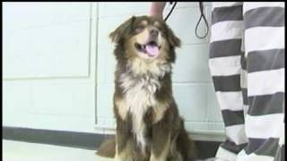"""Inmates And Dogs Get """"new Leash On Life"""" Lance Wheeler Video"""