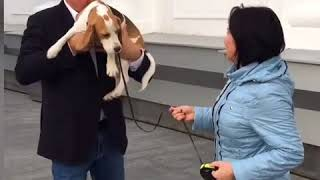 В Кемерове завершились поиски хозяев собаки, которые объявил Сергей Цивилев