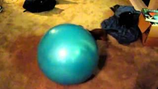 Dachshund Hates Exercise Ball!