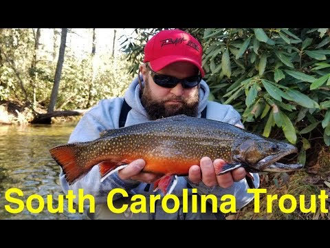 How To Catch Trout In South Carolina