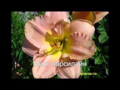 Декоративный подсолнух гелиантус уход, размножение, сорта