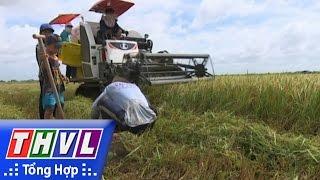 THVL | Cảnh báo tai nạn từ việc chạy theo máy cắt lúa để bắt chuột