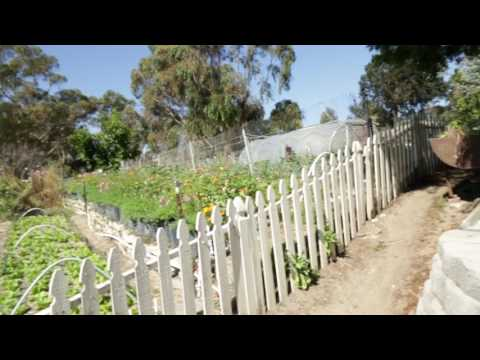 Organic Crop Pano