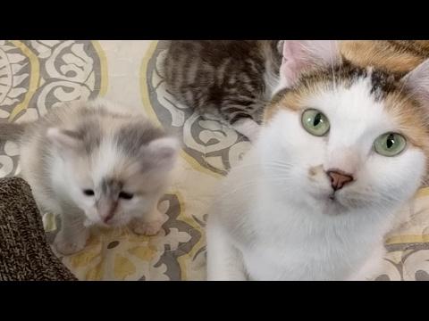 Angels Kittens 2017-03-23