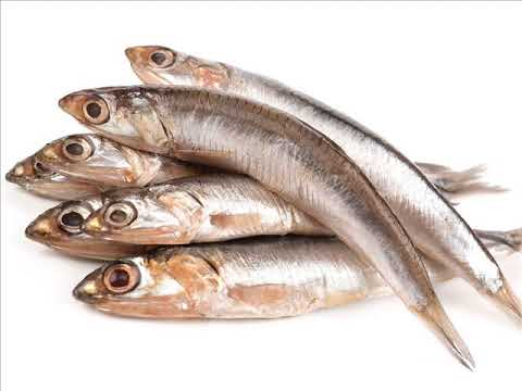 Anchovies The Protein-Packed, Omega-3-Rich Healthy Fish