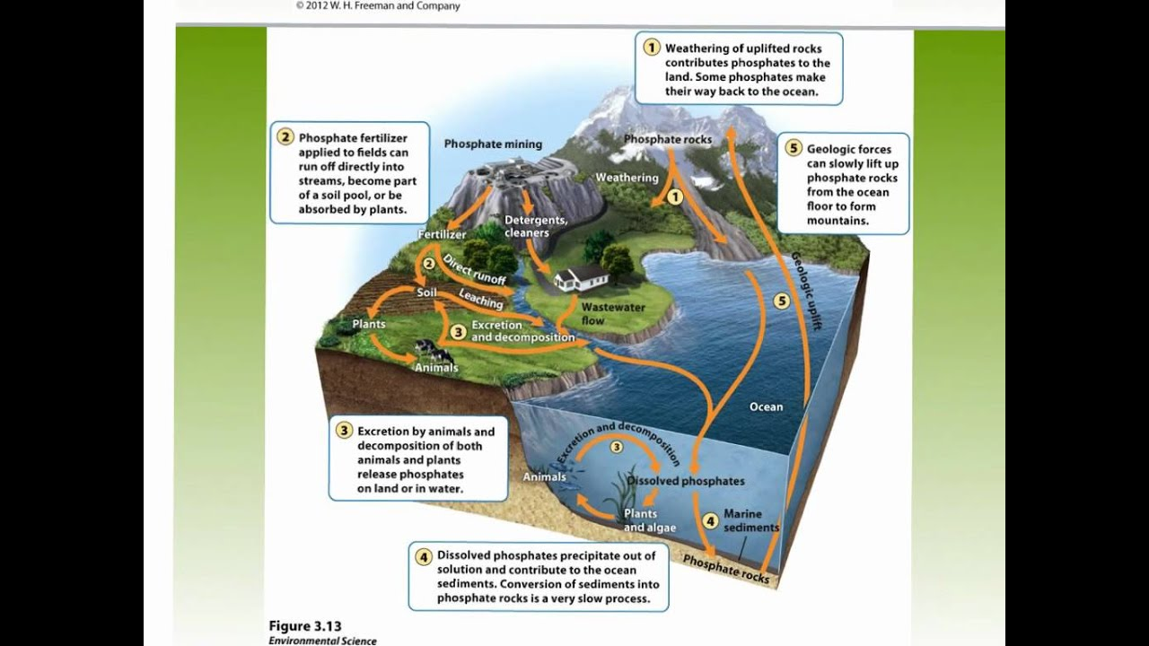 Apes Ch 3 Nitrogen Cycle