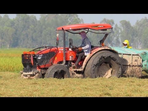 Kubota M6040SU Transport Rice Stuck In Mud / Tractor Mudding / អាបូតទាញត្រាក់ទ័រជាប់ផុង