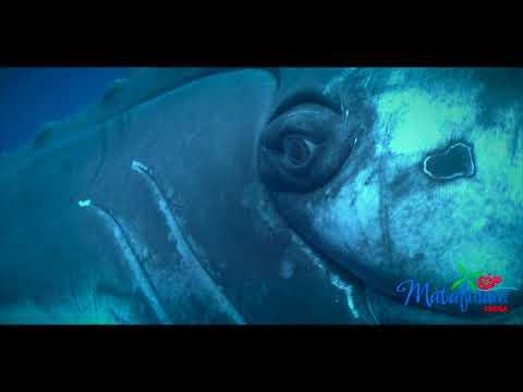 tonga diving matafonua haapai