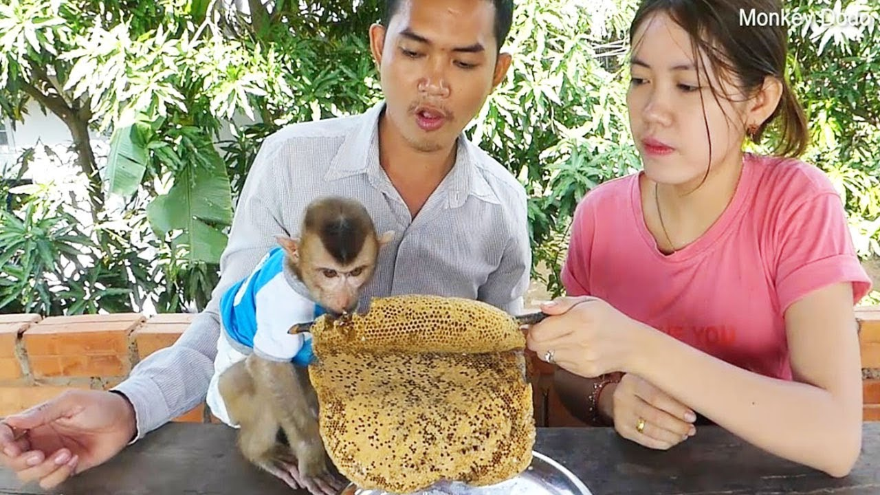 Baby Monkey Dodo!! Happy Family Get Tasty Honey, Dodo like Honey