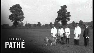 Great Danes (1930)