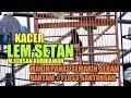 Kacer Lem Setan Makin Panas Makin Seram Hantam 1 Loss Gantangan Siburung(.mp3 .mp4)Kicau Mania(.mp3 .mp4) Mp3 - Mp4 Download