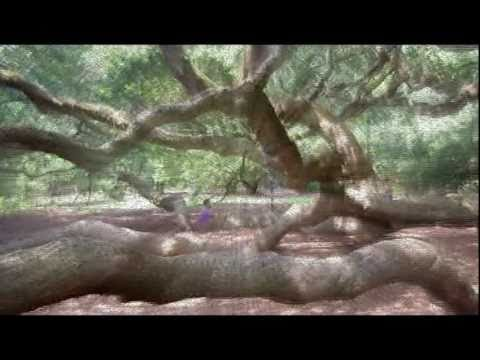 Angel Oak- (Biggest Tree Ever, Charleston South Carolina, Carbon Based Life Forms Irdial)