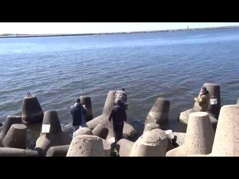Выезд в Балтийск (Пиллау) на рыбалку на Салаку.
