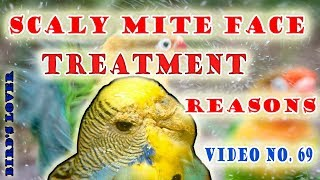 What is scaly faces and scaly leg in birds and their treatment? face or legs par khushki video no 69