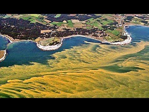 Beware the Blooms: Harmful Algal Blooms in Your Ocean