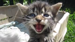 Чудные Котята Кошка и три котёнка Видео стоит посмотреть !!!Веселые котята1