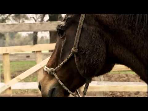 Domador de caballos Capitulo 2 Atila from YouTube · Duration:  44 minutes 49 seconds