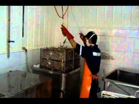 Chilean Premium Crab Meat Production.avi - YouTube