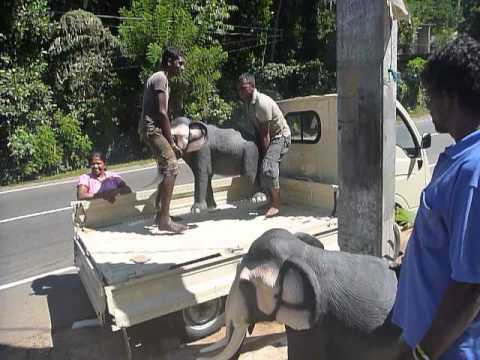 Sri  Lanka,ශ්‍රී ලංකා,Ceylon,Elephant Production Cement